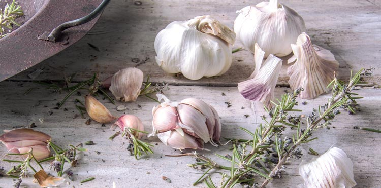 garlic oil as a natural antibiotic